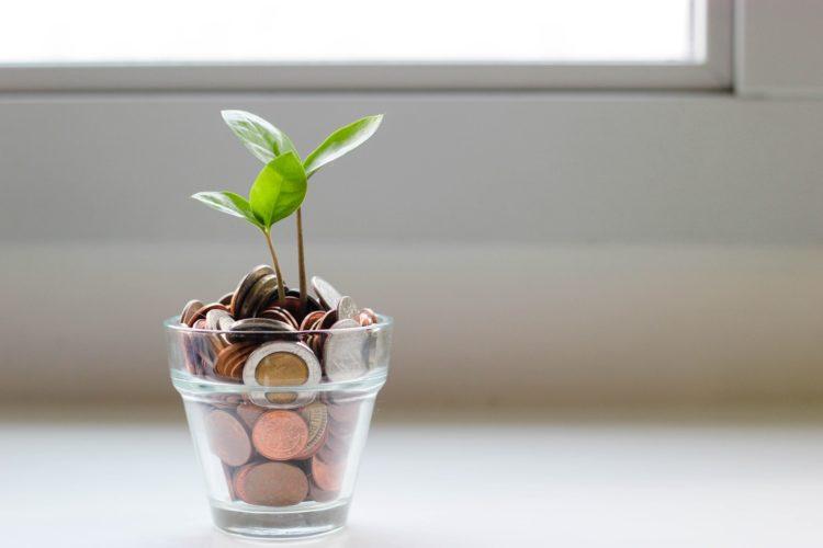 お金の土で育つ芽